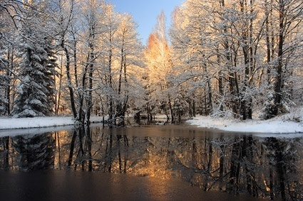 snowmelt_in_the_forest_picture_165874